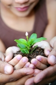 photo enfant et plante